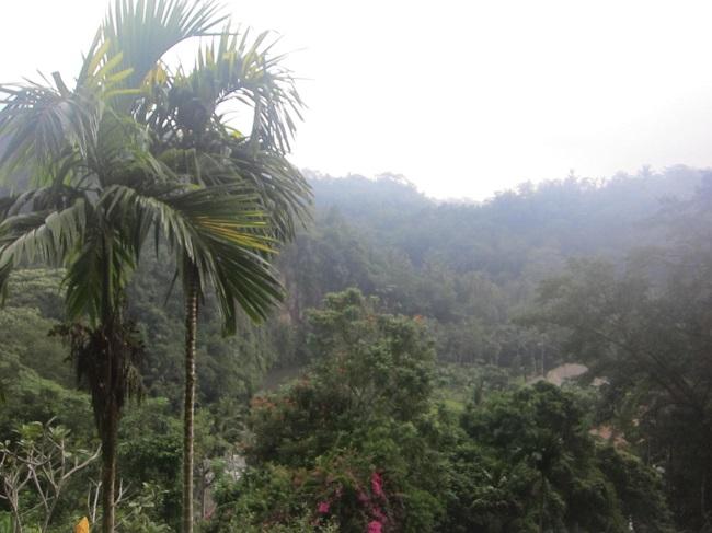 ロイヤルピタマハ 緑豊かな景色