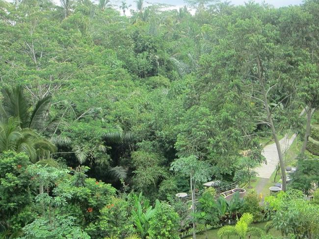 パドマリゾート ウブド プレミアルーム 眺望